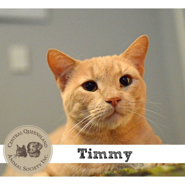 Photo of Timmy