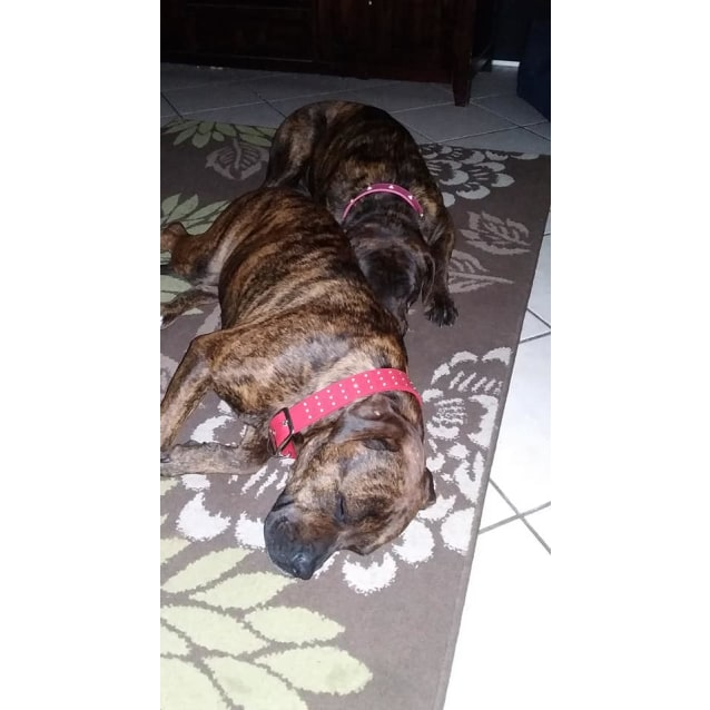 Photo of Mia & Rosie