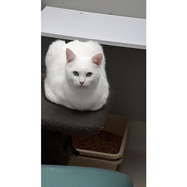 Photo of Opal