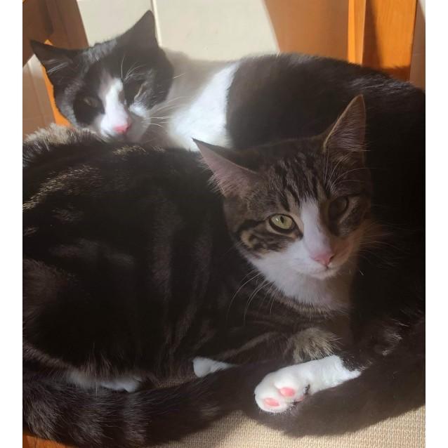 Photo of Richard & Ralph: Bonded Siblings