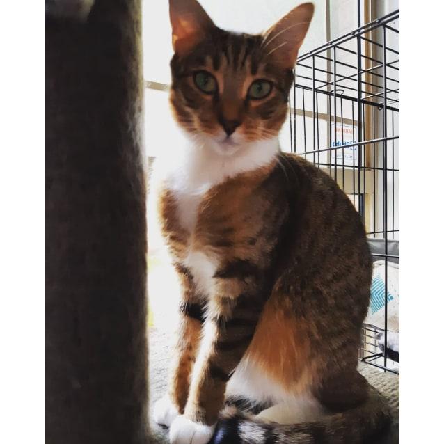 Photo of Zayda (Located In Narre Warren South)