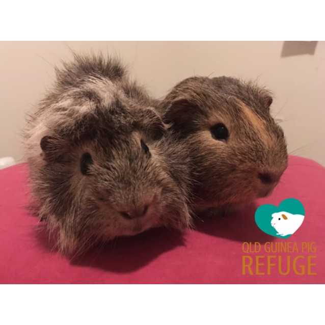 Photo of Jimmy And Mischief