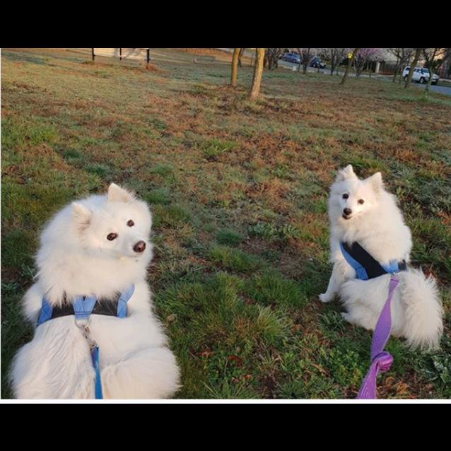 Photo of Yuki And Ghost