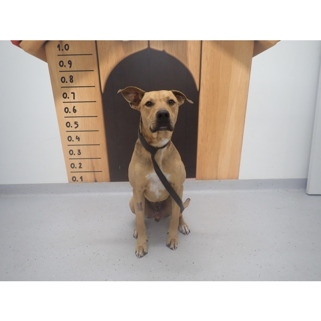 Photo of Scooby   Now On Adoption Trial