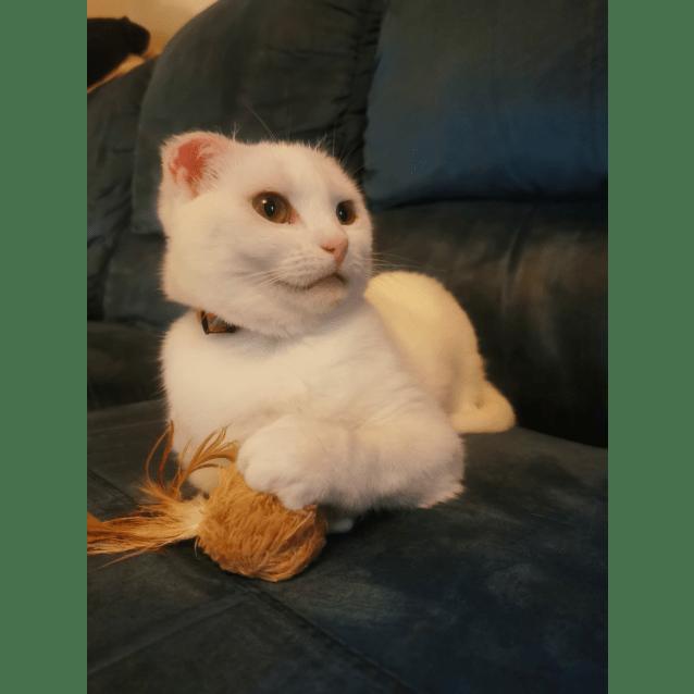 Photo of Emmy (Adoption Pending)
