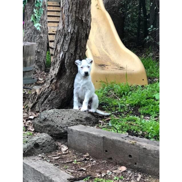 Photo of Ivory