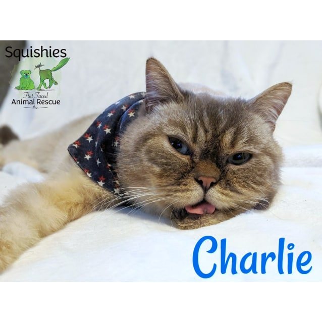 Photo of 🐱‍🏍Charlie 🐱‍🏍