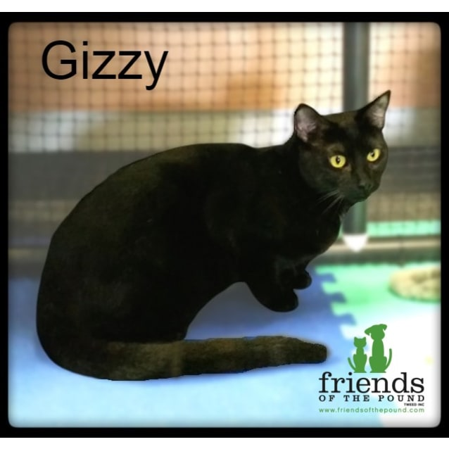 Photo of Gizzy