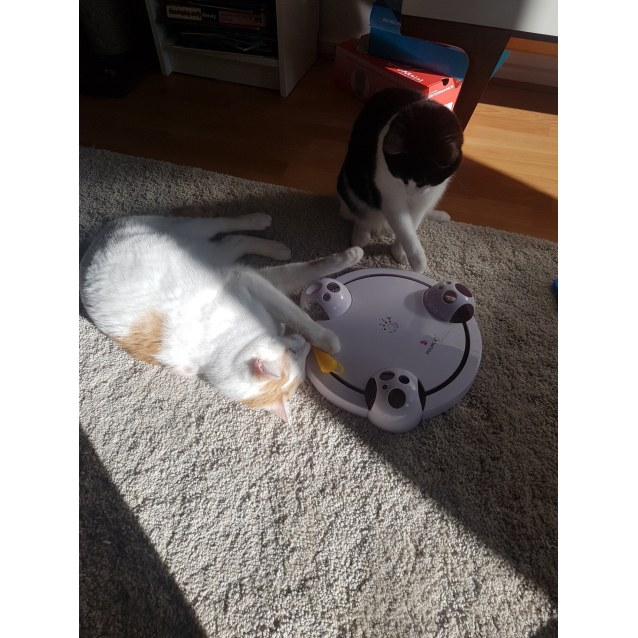 Photo of Moet & Winston (Located In Caulfield South)