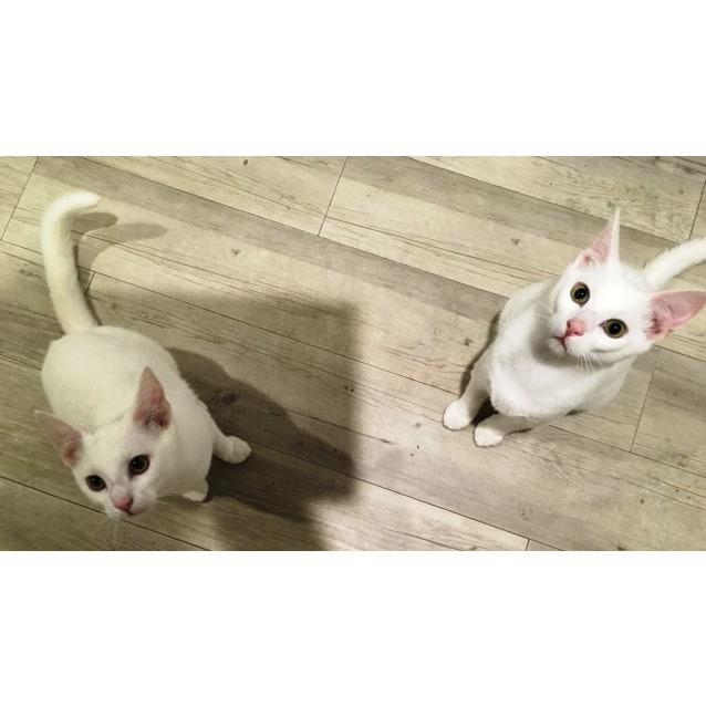 Photo of Casper And Ziggy