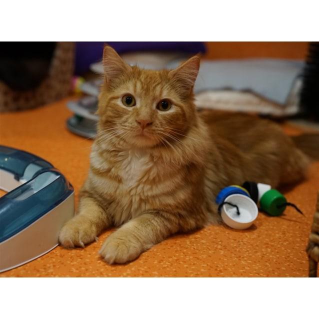 Photo of Leopold