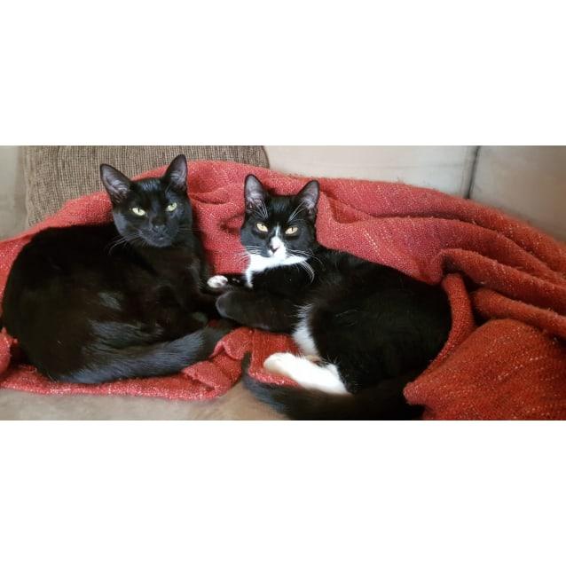 Photo of Charles & Lola