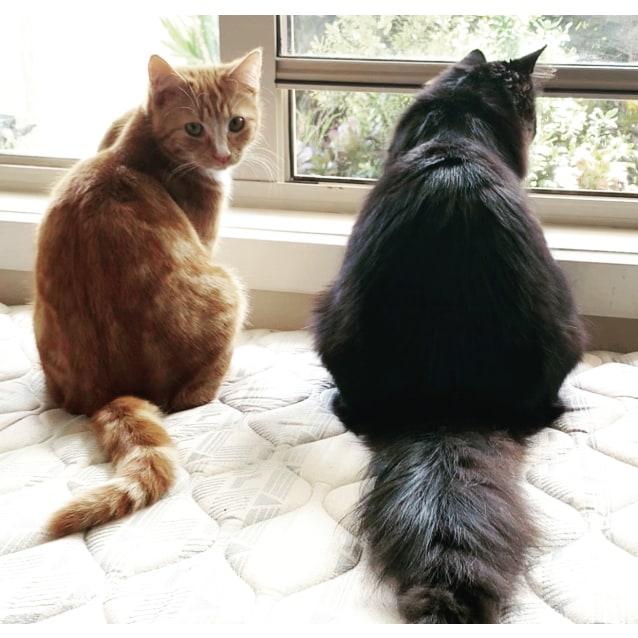 Photo of Casper & Colby