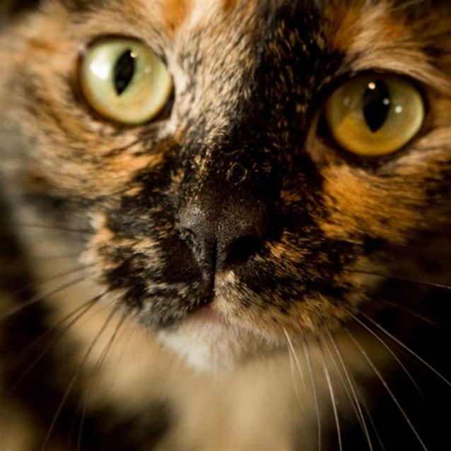 Photo of Amaya