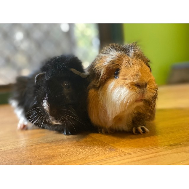 Photo of Spike & Mumma Pig