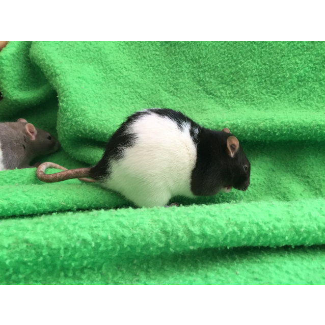 Photo of Thre Boys   Bruce, Snowpea, Snappea