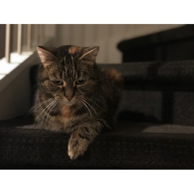 Photo of Miss Kitty Le Purr   Located In Reservoir