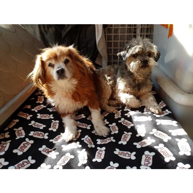 Photo of Benji & Fluffy