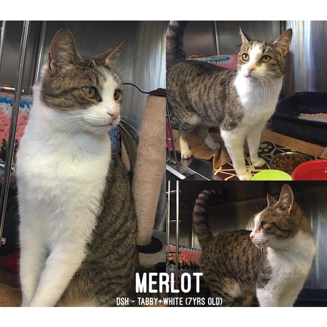 Photo of Merlot