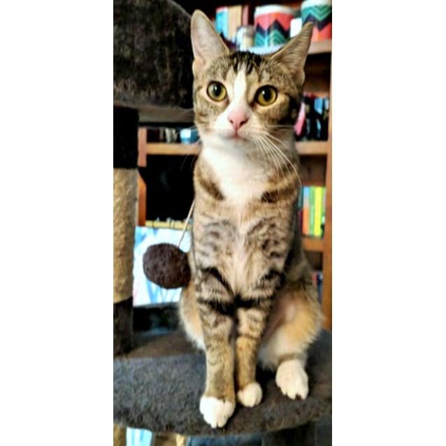 Photo of Imari