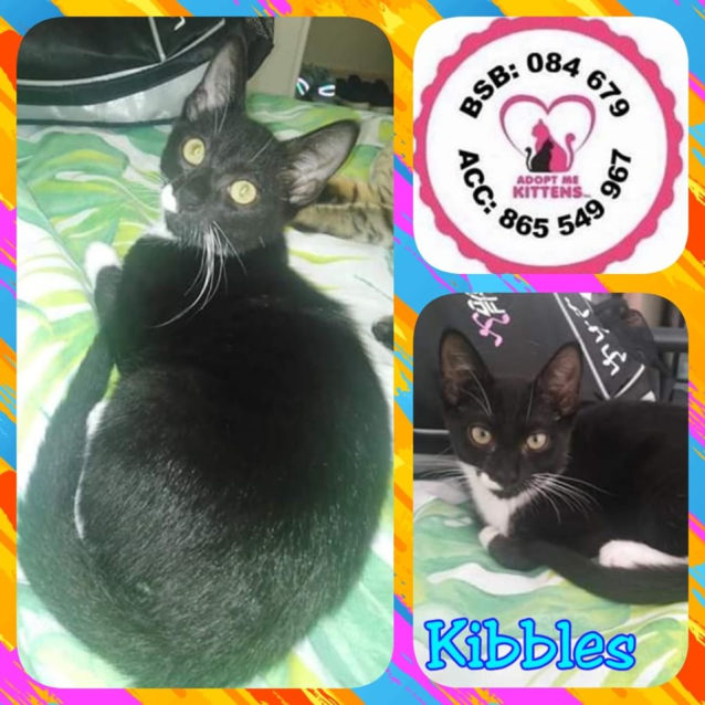Photo of Kibbles