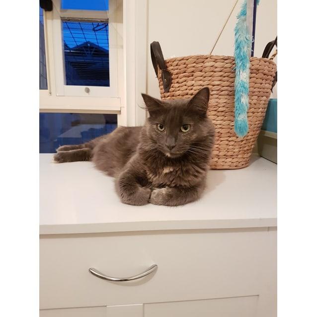 Photo of Amelia