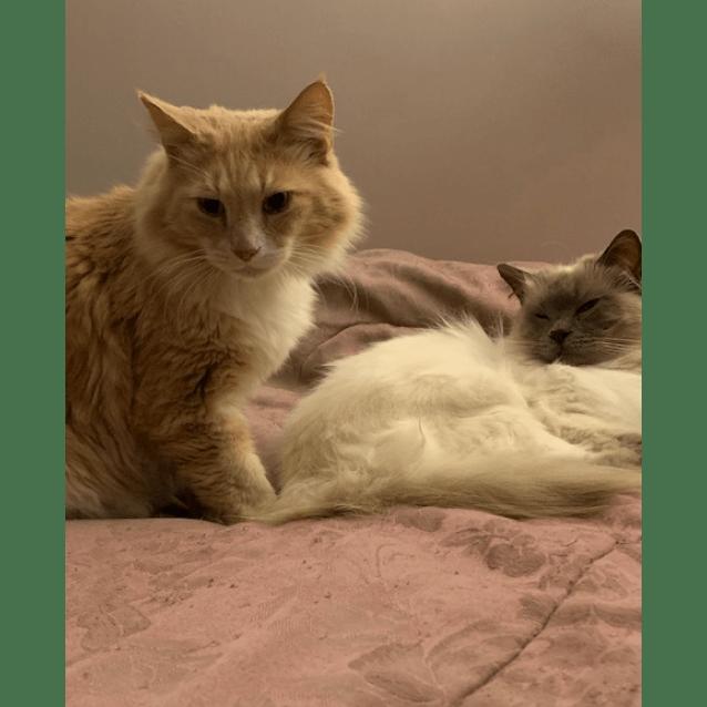 Photo of Winter & Rocky