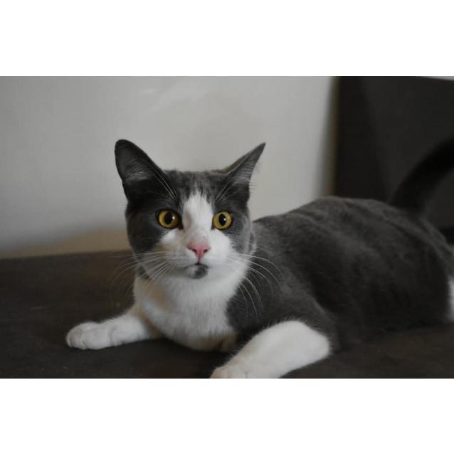 Photo of Tui