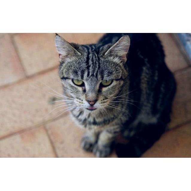 Photo of 199   Elsie