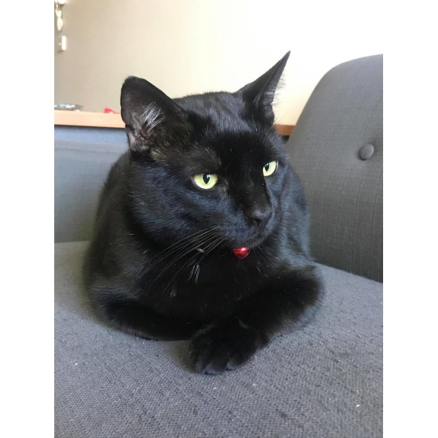 Photo of Jacob (Located In St Kilda East)