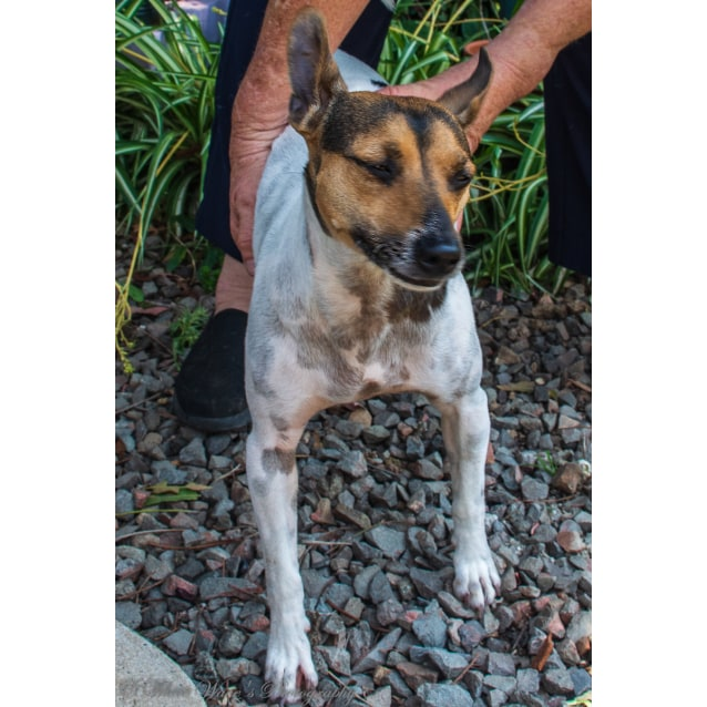 Photo of Gracie ~ 6 Year Old Foxy X (On Trial 9/11/19)