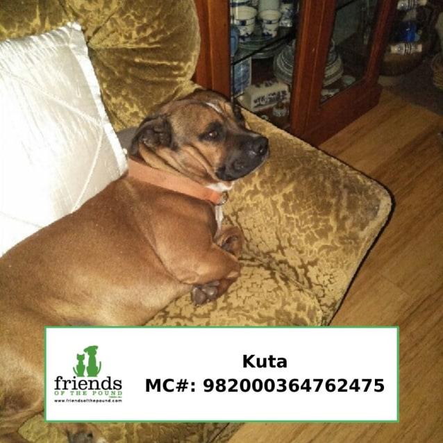 Photo of Kuta