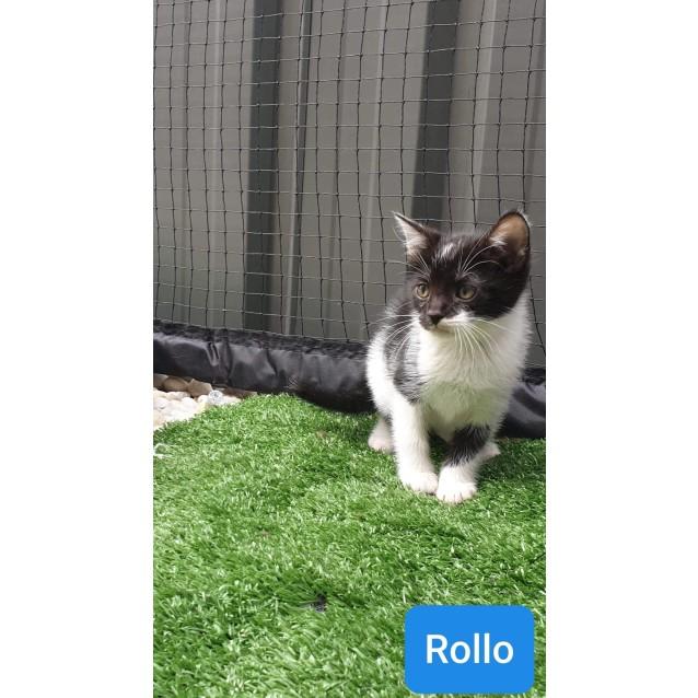 Photo of Rollo