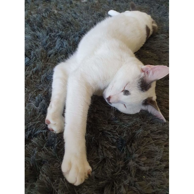 Photo of Marshmallow