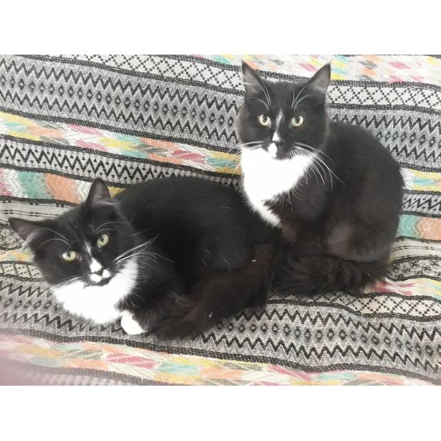 Photo of Heidi & Dexter
