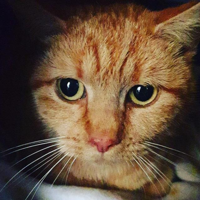 Photo of Jazzy