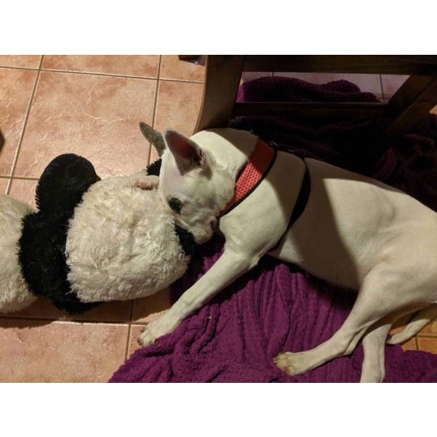 Photo of Luna   Foster Carer Needed
