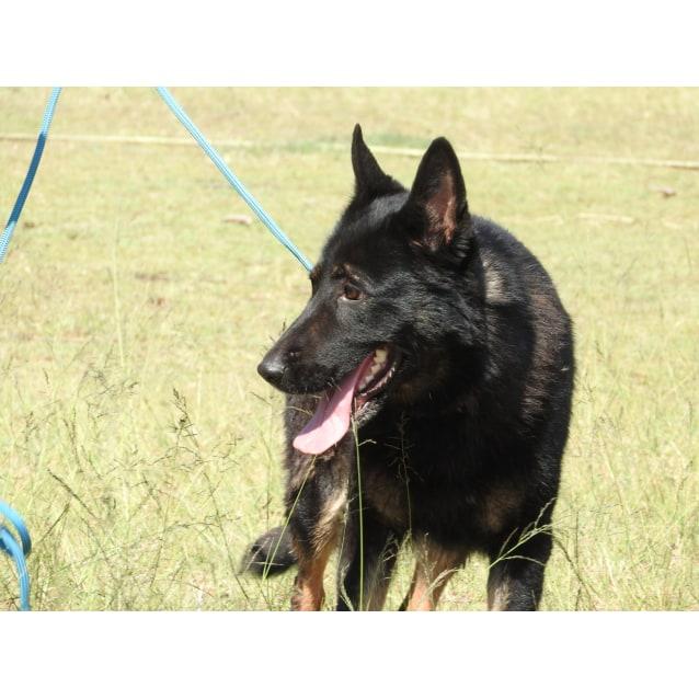 Photo of Layka