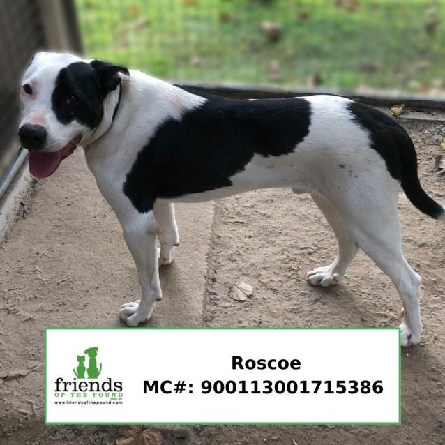 Photo of Roscoe