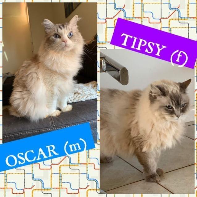 Photo of Tipsy