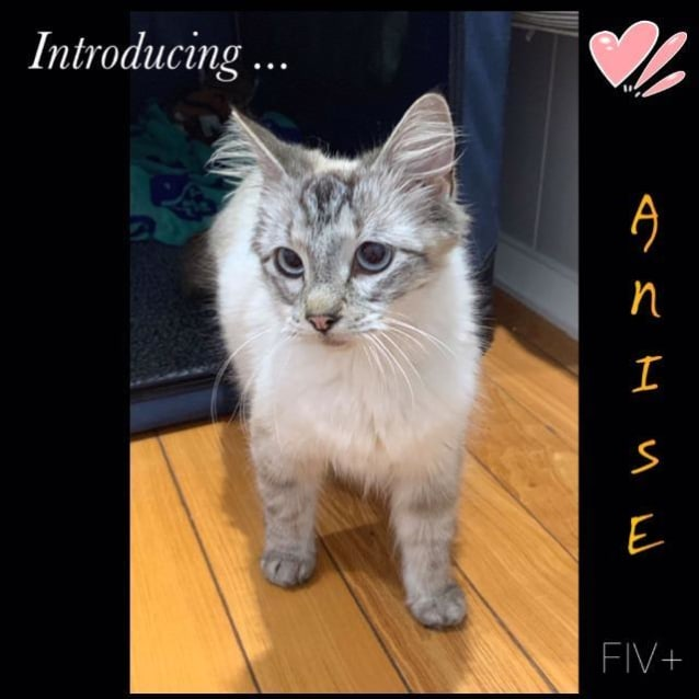 Photo of Anise