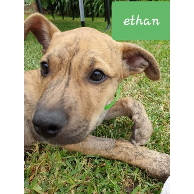 Photo of Ethan