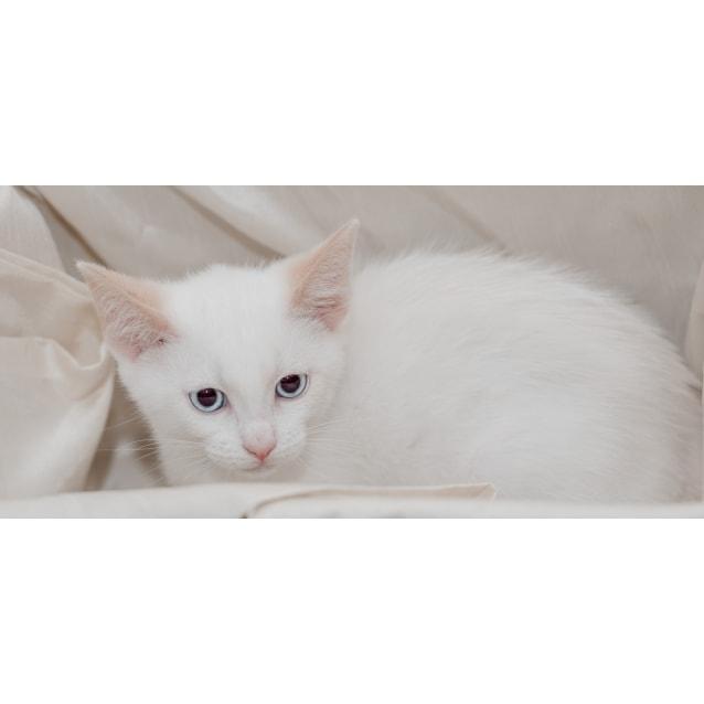 Photo of Pebble