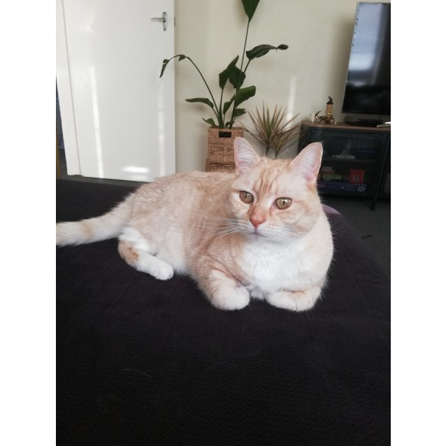 Photo of Punkie   Located In Elwood