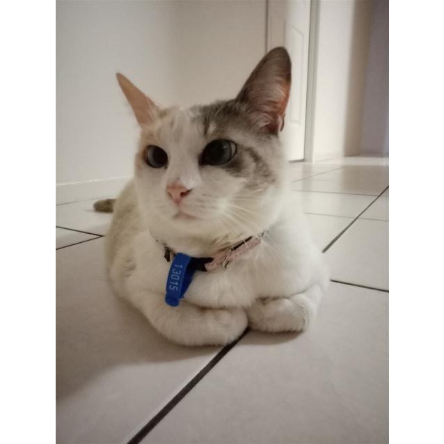 Photo of Momo
