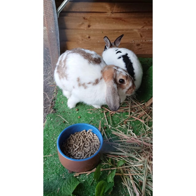 Photo of Bugsy & Sage (Bonded Pair) 🥕🥕