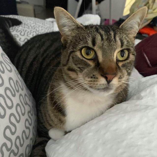 Photo of Lollie