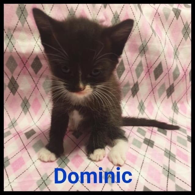 Photo of Dominic