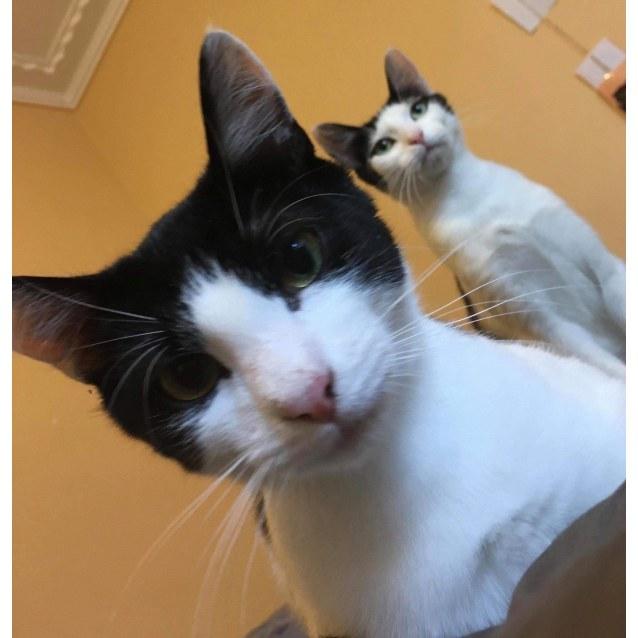 Photo of Bullit And Tammy ❤❤