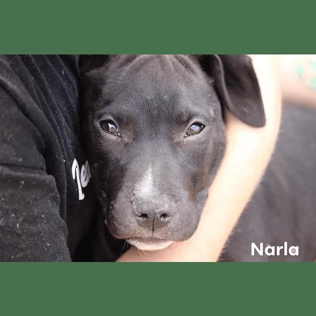 Photo of Narla